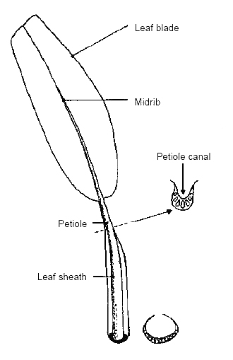 Illustration of leaf descriptor
