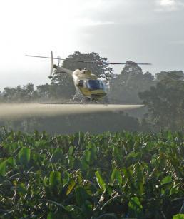 Fungicides used in banana plantations | The banana knowledge