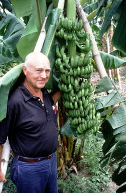 Phil Rowe, the late banana breeder with one of his creations, FHIA-25.