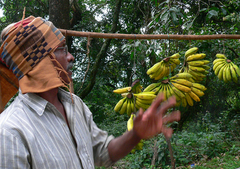 In 2006, the Tamil Nadu Hill Banana Grower's Federation was created.  It has since succeeded in getting Geographical Indication designations for Hill Bananas. (Photo credit: Anne Vézina)