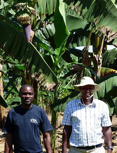 Breeders Michael Batte from IITA (left) and Robooni Tumuhimbise from NARO (right)