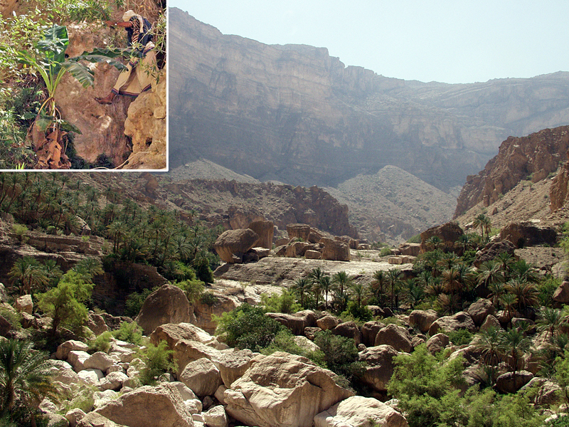 The scientists went as far as Umq Bi'r, a semi-abandoned settlement at the head of the valley. This is where a mysterious cultivar, named after the oasis, had previously been collected 20 m above the valley floor (insert). (Photos by A. Buerkert)