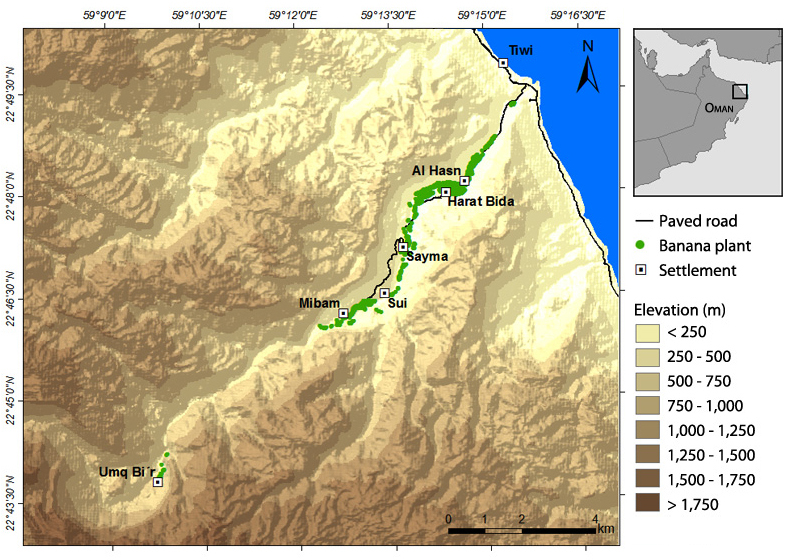 Location of the settlements and of the banana plants recorded during the 2010 survey of Wadi Tiwi. (Map by K. Brinkmann)