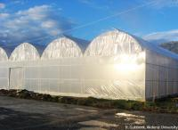 Turky Plastic Greenhouses HG