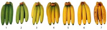 Ripeness colour chart
