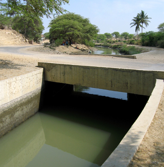 Irrigation canals have been built to bring the water from the Chira river to the fields where bananas are cultivated. Sugar, cotton and rice used to be the main crops grown on the northern coast of Peru, but agriculture has since diversified to include other high-value export crops such as limes, mangos and grapes. (Photo Charles Staver)