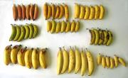 Array of bananas screened for vitamin A